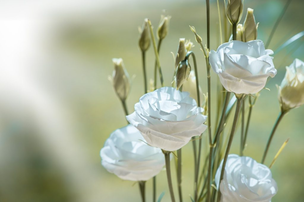 Beautiful white 'Lisianthus' flowers which symbolise appreciation - in memory of Jim Thatcher.